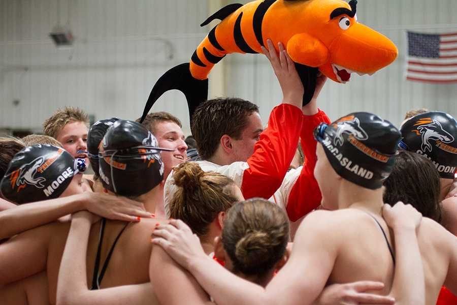 Tigersharks come together during the Orange-White meet.