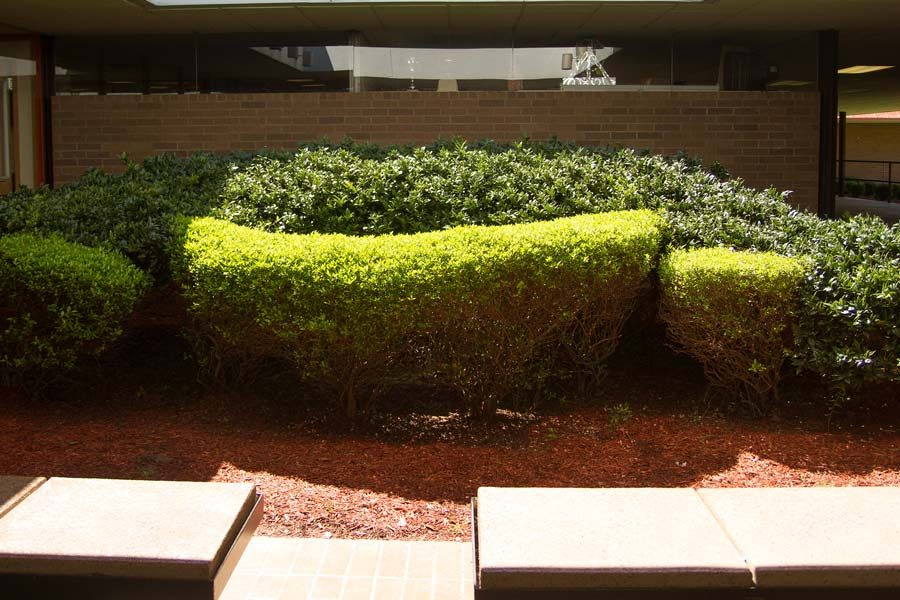 The removal of the bushes in the courtyard is part of an ongoing project by administration to beautify the campus.