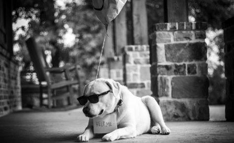 A bark for help