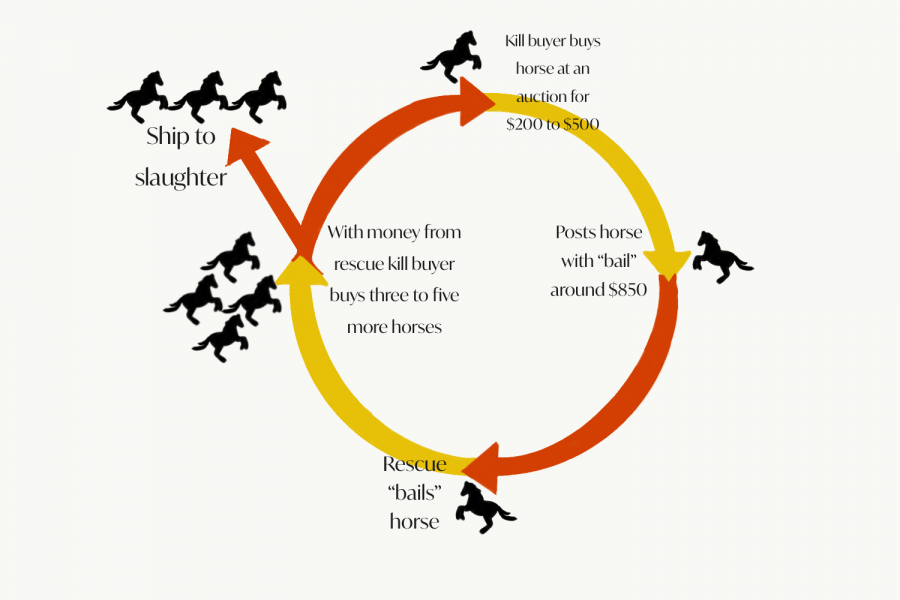 """The unending """"circle"""" of buying or rescuing kill pen horses."""