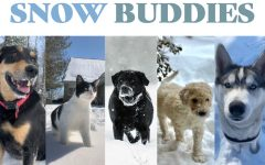 submitted photos. While the snow trapped students inside, their furry friends couldn't resist playing in the snow.