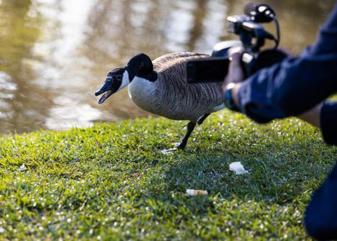 PAC pond goose Watson had many opinions to share once he was approached for an interview.
